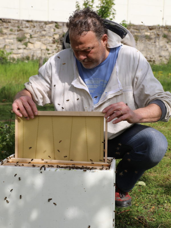 Un apiculteur s'occupe de sa ruche